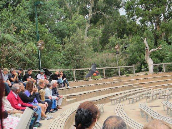 Healesville, Australië: Birds Show