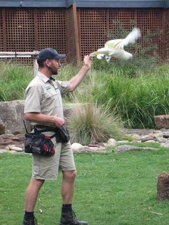 Healesville, Australia: Bird Show