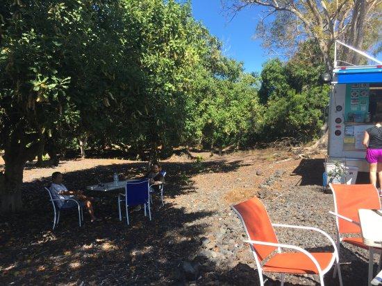 Captain Cook, Hawái: Lunch under Macadamia Tree