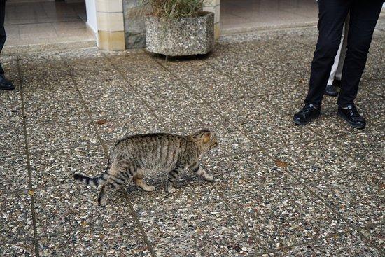 Pedoulas, Chipre: cat
