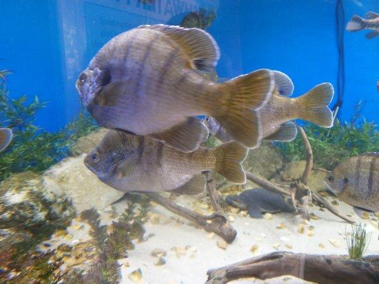 Big Tanks With Fish And Sharks Picture Of Florida Keys Aquarium