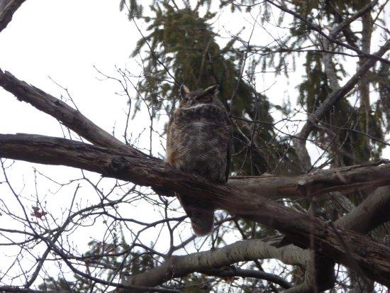 Huntington, NY: One of the main reason's for the preserve's existence !