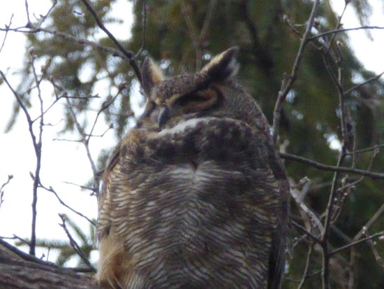 Huntington, NY: Wise old owl hoping the Fish and Wildlife service wises up on visitor abuse of Target Rock !