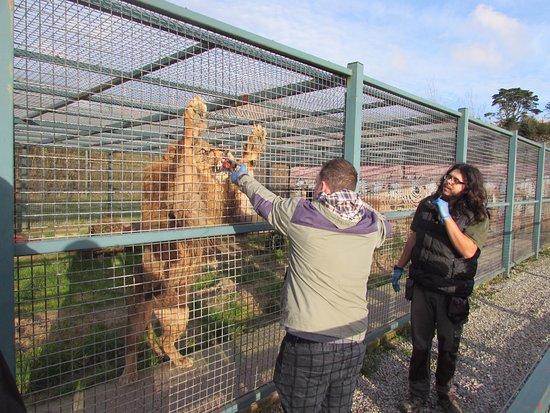 Ilfracombe, UK: Feeding and training Leo myself with Shane :)