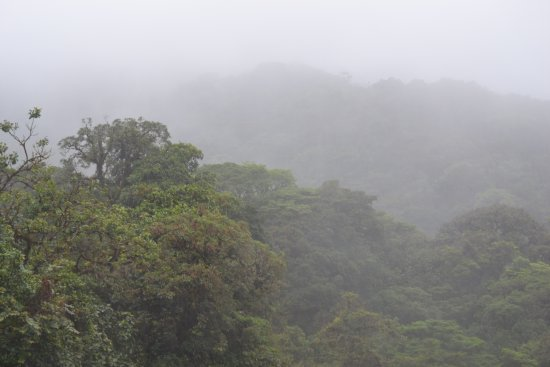 Playa Hermosa, Costa Rica: Cloud forest