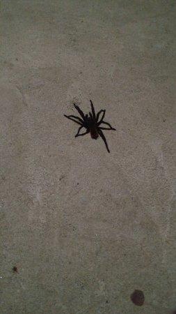 Belmopan, Belize: Some friendly bugs?