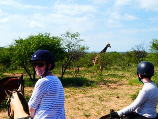 Ant's Hill & Ant's Nest: One of our many encounters with the giraffe
