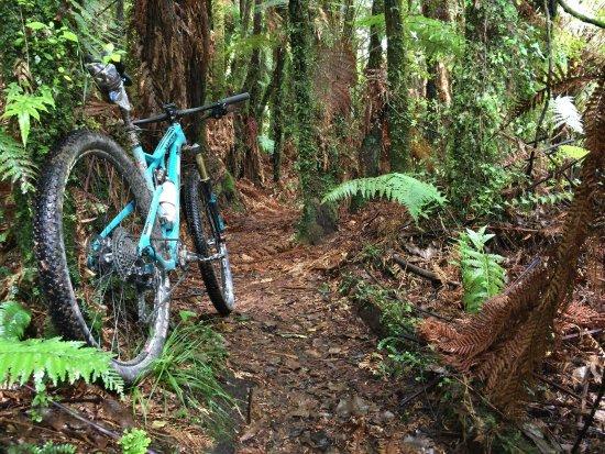 Te Kuiti, Nueva Zelanda: photo0.jpg