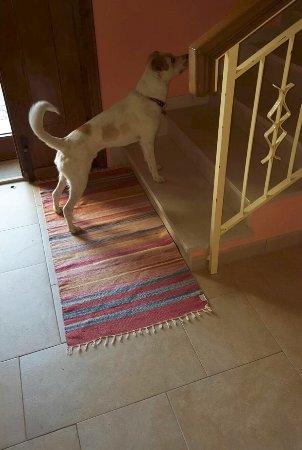 Sarteano, İtalya: amici dei cani - un nostro ospite...