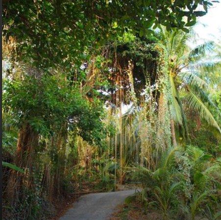 Chills Resort: photo1.jpg