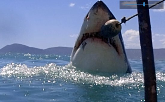 Great White Shark Tours : Shark breach (coming off his peak, say 1/2 meter. Was just happy to catch any breach!)