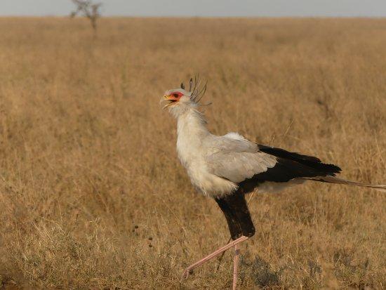 Arusha Region, Tanzania: Et lui aussi