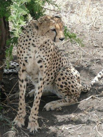 Arusha Region, Tanzania: C'est sérieux ...