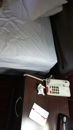 Argyll Plaza Hotel: bedbug