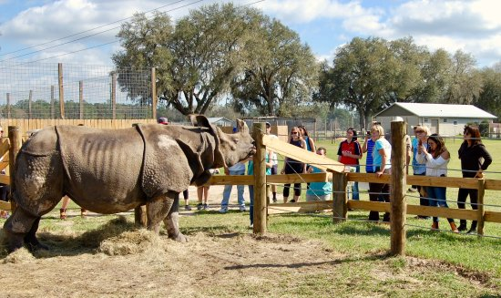 Gainesville, FL: Our group meeting and feeding Henry, the Indian Rhino!