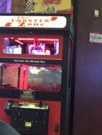 North Las Vegas, NV: Unsettling live lobster game :(