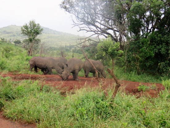 Zululand, South Africa: Rhino playtime