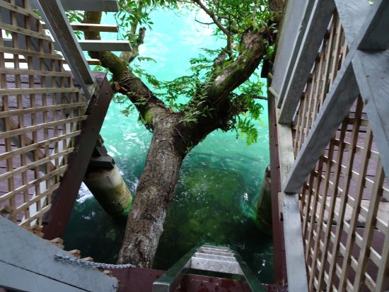 Salelologa, Samoa: Ladder from our deck to the lagoon