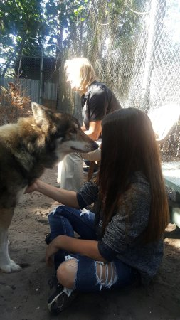Golden Gate, ฟลอริด้า: Shy Wolf Sanctuary Education & Experience Center