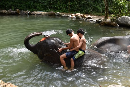 Phang Nga, Thailand: The elephants can splash you when signalled!