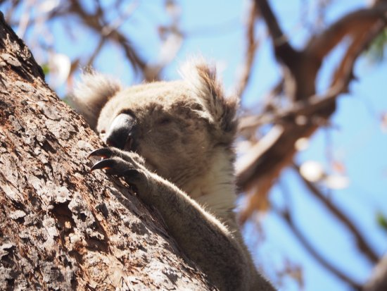 Paynesville, Australia: Peek a boo