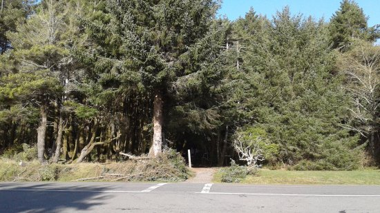Harris Beach State Park: Easy forest access