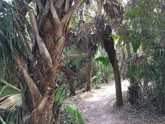 Estero, FL: photo1.jpg