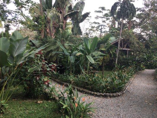 The Lodge and Spa at Pico Bonito: Pathway to cabins