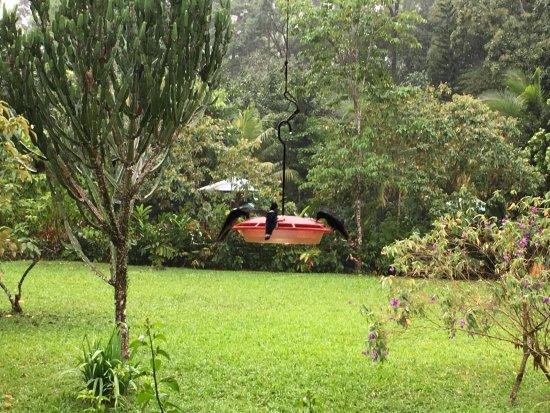 The Lodge and Spa at Pico Bonito: humming bird feeders at the restaurant