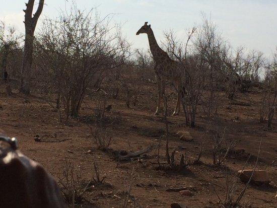 Hectorspruit, Южная Африка: photo1.jpg