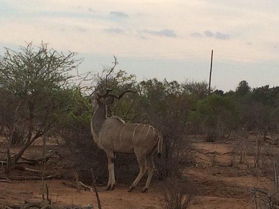 Hectorspruit, Republika Południowej Afryki: photo2.jpg