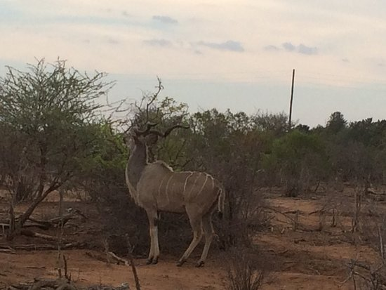 Hectorspruit, Νότια Αφρική: photo2.jpg