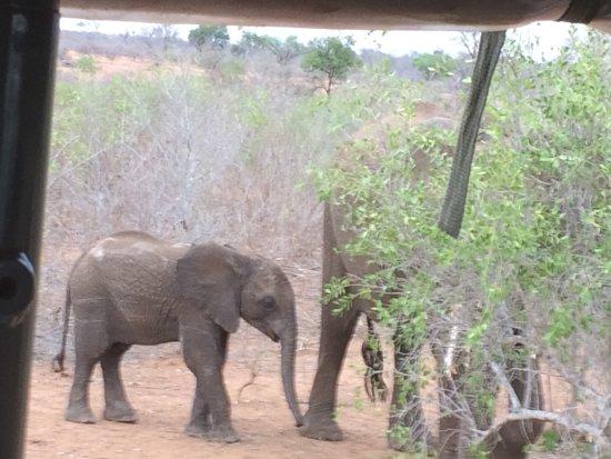 Hectorspruit, Южная Африка: photo3.jpg