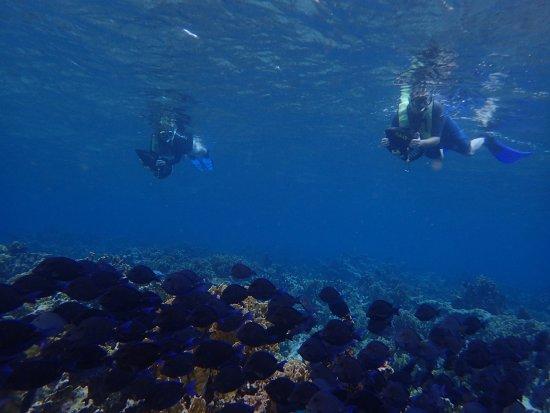 Savaneta, Aruba: Using the scooters to snorkel