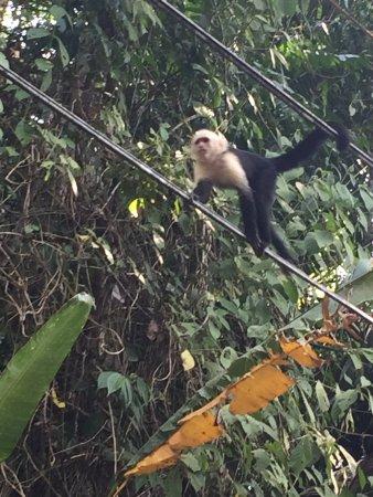 Costa Rica Jade Tours: photo1.jpg