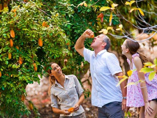 Murwillumbah, Australia: Tropical Fruit World, Tweed