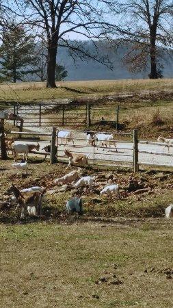 Alpena, AR: Rockin' Z Guest Ranch