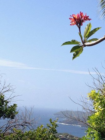Mount Pleasant, Bequia: View from the grounds