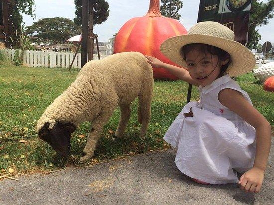 Cha-am, Thailand: princess sheep