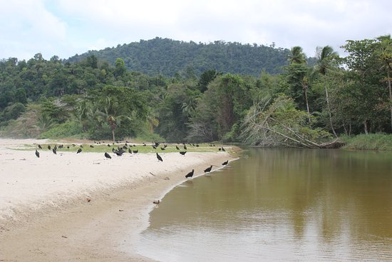Las Cuevas Beach : river running into the bay