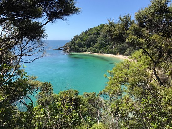 Whale bay northland nude