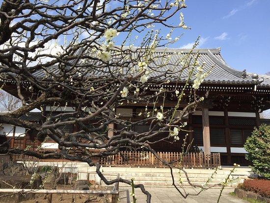Suginami, Japon : photo0.jpg