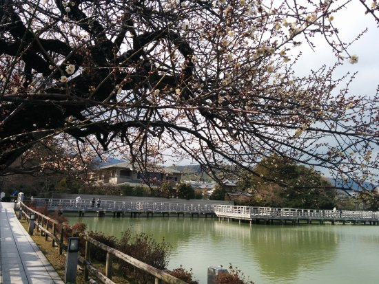 Nagaokakyo 사진