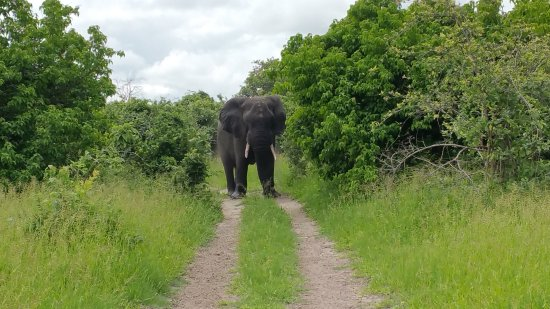 Chobe National Park, Botswana: An encounter you will never forget!