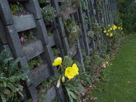 Coastal Walkway: Flowers on retaining wall