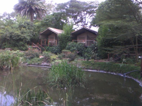 Wildebeest Eco Camp: Deluxe Safari Tents