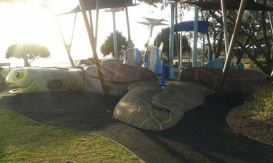Bargara, ออสเตรเลีย: A Huge Loggerhead Turtle.