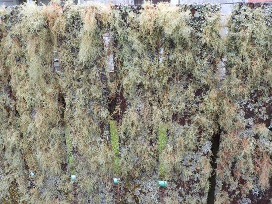 Stratford, New Zealand: Mossy fence