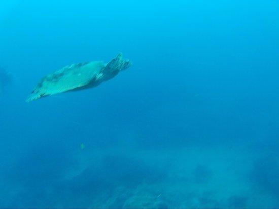 ProFun Divers: la deuxième tortue rencontré lors de la deuxième plongée