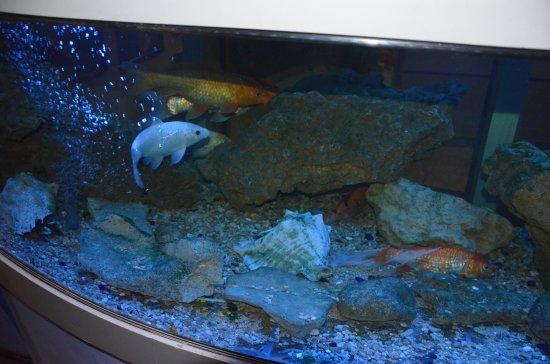 Zaporizhzhya, Ukraina: Еще есть аквариум с рыбками
